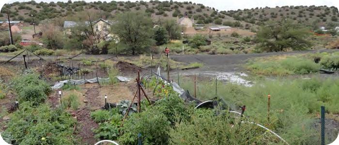 Madrid-NM-Garden