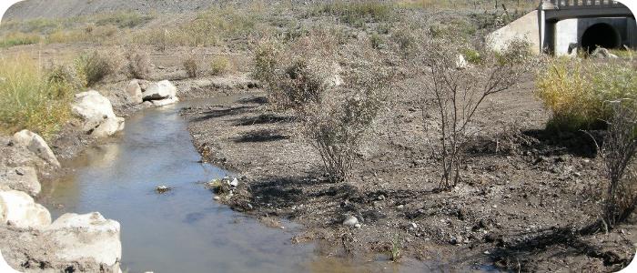 Mill-Creek-near-Pagosa-Springs-CO-1