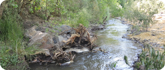 Mimbres-River_6-7-15_post-construction-woody-debris