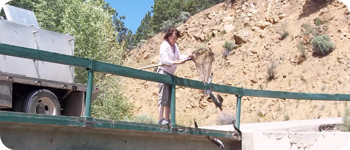 Red-River-in-Red-River-NM-Fish-Stocking-2014