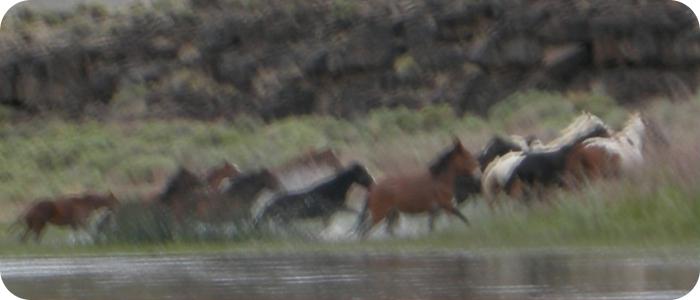 Rio-Grande-below-Alamosa-CO-Reach-5_3 horses