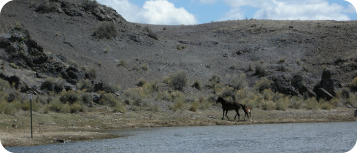 Rio-Grande-below-Alamosa-CO-horses